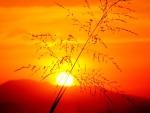 A Blade of Grass at Sunset