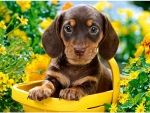 Puppy in Yellow