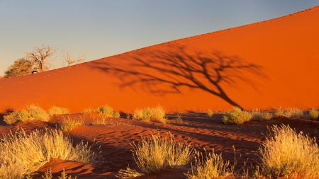 Sunset Desert - shadow, bush, sand, sunset