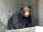 Overlooking Bear