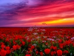 Beautiful Flowers... :)