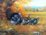Wild Turkeys in Fall