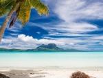 Bora Bora Palm