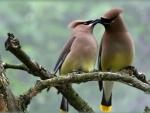 Kindness in Birds