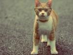 Tabby Glasses