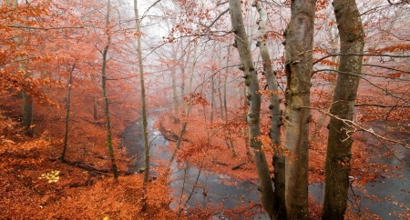 Autumn River - forest, fall, river, lakes