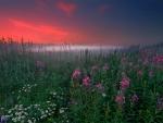 Splendid our planet