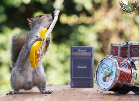Guitarist - cute, max ellis, squirrel, drum, yellow, guitarist, funny, animal