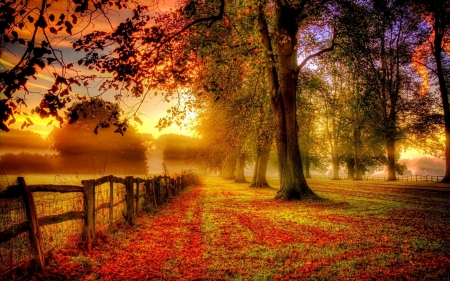 Autumn Sunrise - Forests & Nature Background Wallpapers on Desktop ...