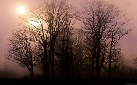 Foggy sunrise - forest, fall, autumn, dawn, dusk, sunset, trees, abstract, fog, mist, photography, wallpaper, nature, sunrise, scene, landscape