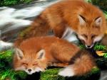Fox on Falls