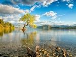 single tree in lake wanaka
