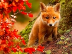 Fox at Autumn Forest