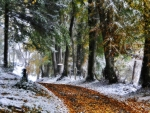 wonderful forest path in winter hdr