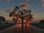 'Tree of life'.....