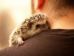 Hedgehog ♥