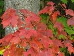 Jones Pond - Adirondack Foliage 2015