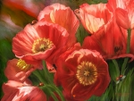 Ladybugs on Red Poppies