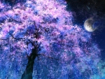 Cherry tree and full moon