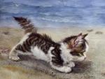 kitty on the beach