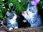 Playful Kitties
