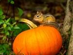 Autumn Chipmunk ♥