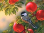 Chickadee at Orchard