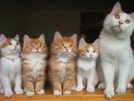 Kittens Family