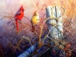 Scarlet Cardinals