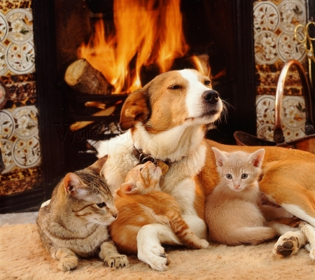 dog and cats by the fireplace - fireplace, kittens, cats, animals, dog