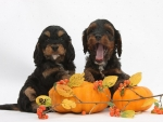 pups with pumkins