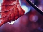 Dewdrop on the leaf
