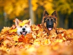Autumn Dogs