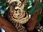 Wild cat on the tree