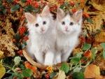 Kittens in an autumn basket