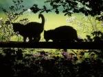 black kittens in the garden