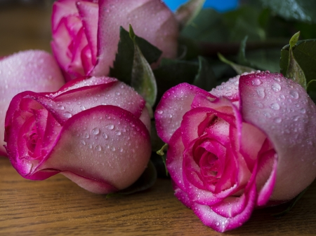 Wet roses - wet, bouquet, water drops, flowers, beauty, roses, beautiful roses