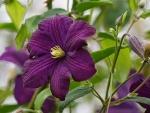 Beautiful Flowers(Hemerocallis)
