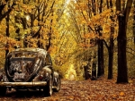 old VW beetle in autumn forest