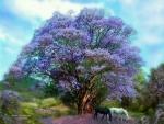Under the Jacaranda