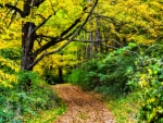 path through the forest in autumn hdr
