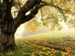 Old fall tree