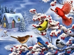 Winter Songbirds F