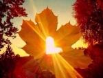 Fall leaves sunshine