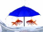 Blue umbrela
