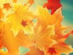 Sun Shining on Fall Leaves