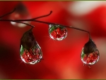 Morning Droplets