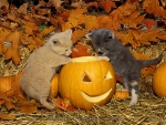 two kittens with a Halloween pumpkin