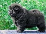 Gorgeous puppy