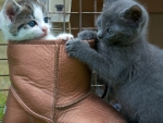 Cute Kittens Playing